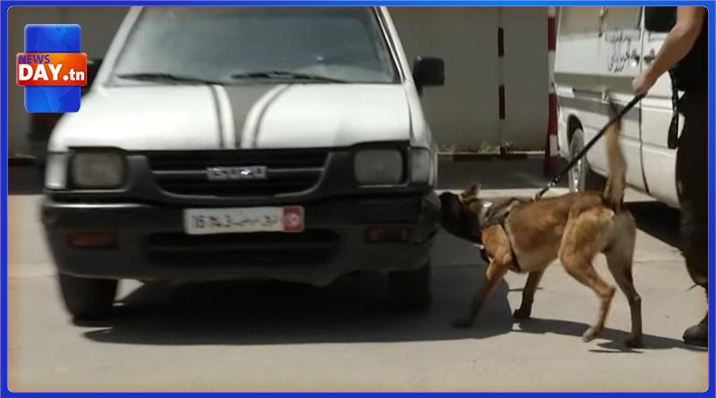 تدريبات روتينية لفرق الحرس الوطني مع فرقة الأنياب التونسية : كلاب أذكى من البشر لا تحاول إغضابهم( فيديوات)